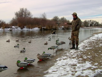 Duck Decoy Strategies