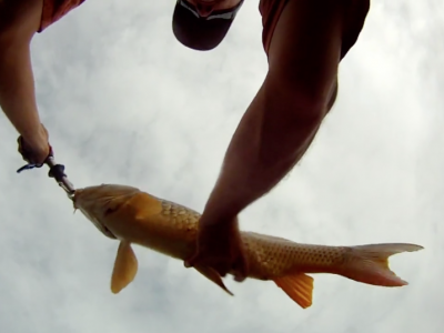 Fly Fishing for Carp – Eleven Mile Reservoir