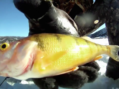 Ice Fishing – Yellow Perch