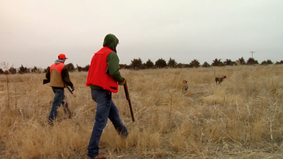Pheasant Hunting Colorado