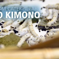 From Caterpillar to Kimono